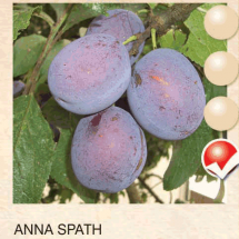 anna spath sljiva-sadnice-agrokalemplod_05