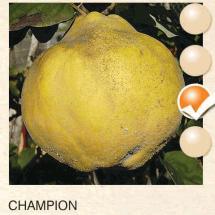 champion dunja-sadnice-agrokalemplod_1