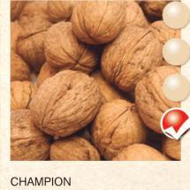 champion orah-sadnice-agrokalemplod_33