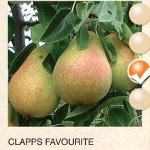clapps favourite kruska-sadnice-agrokalemplod_02