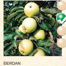 djerdan jabuka-sadnice-agrokalemplod_06