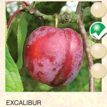 excalibur sljiva-sadnice-agrokalemplod_08