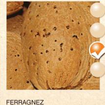 ferragnez badem-sadnice-agrokalemplod_13