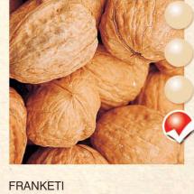 franketi orah-sadnice-agrokalemplod_35