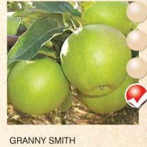 granny smith jabuka-sadnice-agrokalemplod_21