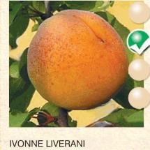ivonne liverani kajsija-sadnice-agrokalemplod_06