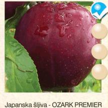 japanska sljiva - ozark premier sljiva-sadnice-agrokalemplod_12