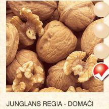 junglans regia - domaci orah-sadnice-agrokalemplod_13