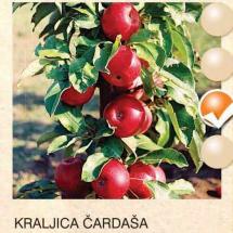 kraljica cardasa jabuka-sadnice-agrokalemplod_11