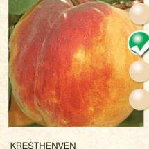 kresthenven breskva-sadnice-agrokalemplod_03