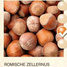 lesnik-sadnice-agrokalemplod_49