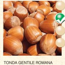 lesnik-sadnice-agrokalemplod_51