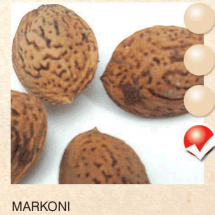 markoni badem-sadnice-agrokalemplod_15