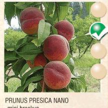 prunus presica nano breskva-sadnice-agrokalemplod_02