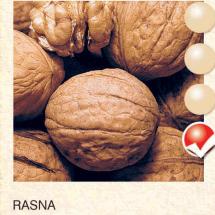 rasna orah-sadnice-agrokalemplod_31