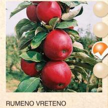 rumenilo vreteno jabuka-sadnice-agrokalemplod_12