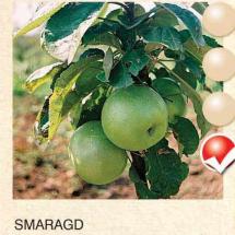 smaragd jabuka-sadnice-agrokalemplod_22
