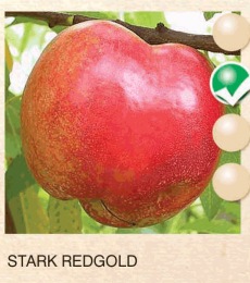 stark redgold nektarina-sadnice-agrokalemplod_5