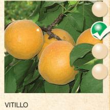 vitillo kajsija-sadnice-agrokalemplod_04
