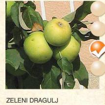 zeleni dragulj jabuka-sadnice-agrokalemplod_23